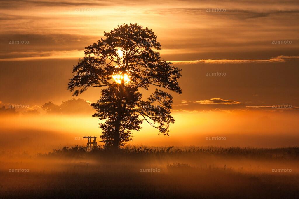 0-100905_0650-9397 | Sonnenaufgang hinter Baum im Morgennebel. --Dateigröße 3888 x 2592 Pixel--