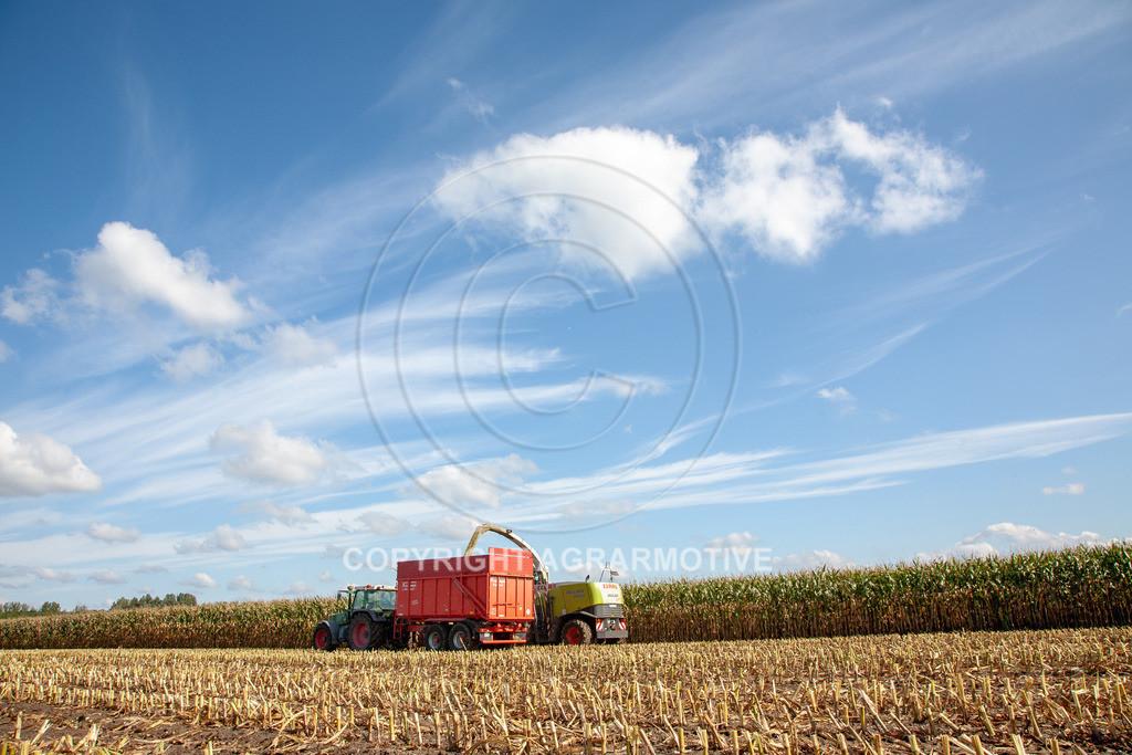 20080914-IMG_8980 | Silomais wird gehäckselt - AGRARFOTO Bilder aus der Landwirtschaft