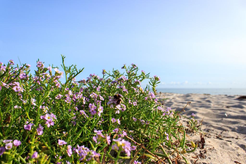 Schubystrand im Sommer | Blumen am Strand in Schubystrand