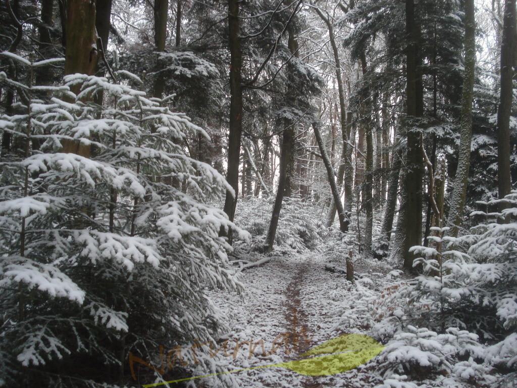 Winterzauberwald | Hier wohnen die Märchenwesen - tritt ein in die bezaubernde schneeverhangene Winterwelt des Waldes und erlaube Dir, zu träumen!