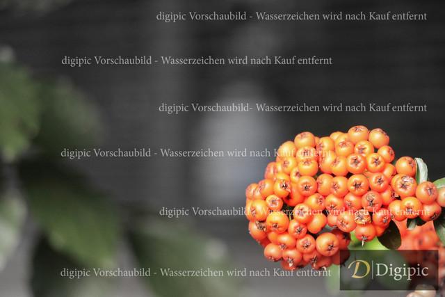 Strauch (5)-Vorschaubild