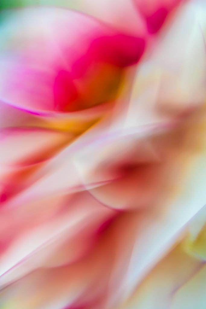 Pflanzen abstrakt | Triptychon Thetis 2 | Pflanzen abstrakt | Triptychon Thetis