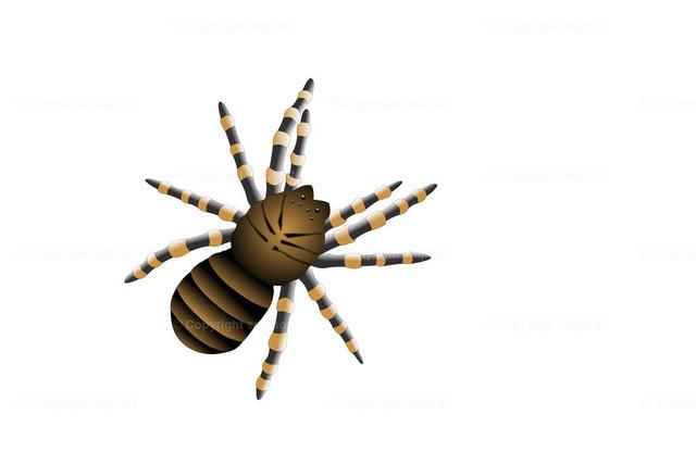 Spinne (Illustration) | Eine gestreifte Spinne über weißem Hintergrund.