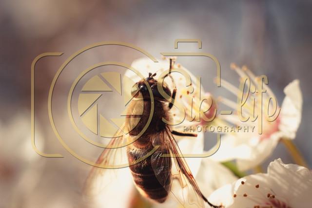Fleißiges Bienchen 7