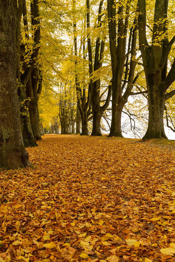 Herbstfarbe 1
