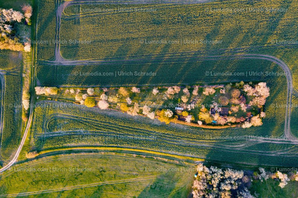 10049-51353 - Kirschblüte bei Eilenstedt