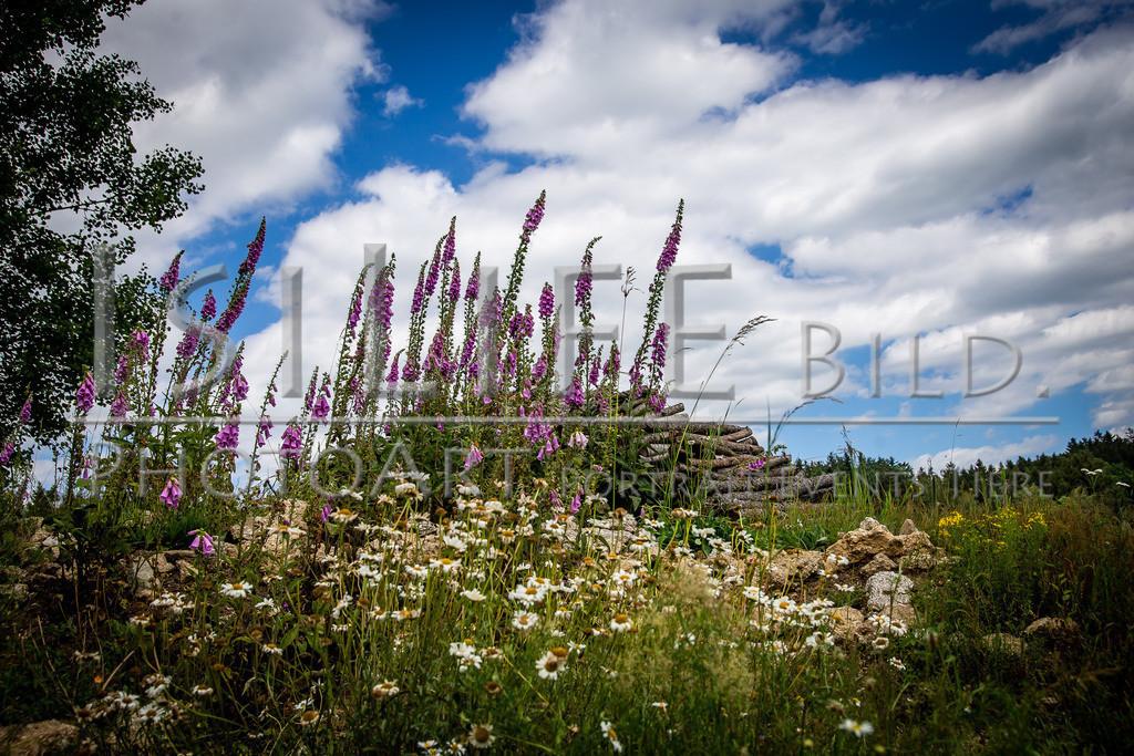 Naturschutzgebiet Doost | Blumen bei einer Rast