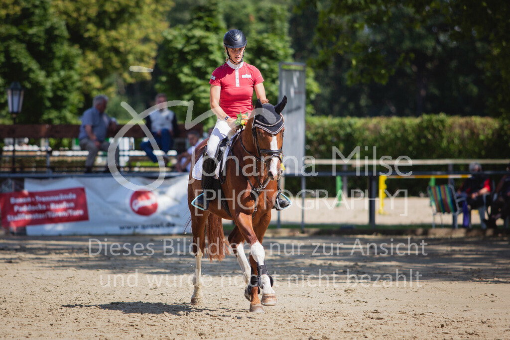 200819_Delbrück_Sprpf-A_2_1-280 | Delbrück Masters 2020 Springpferdeprüfung Kl. A** 4-6jährige Pferde