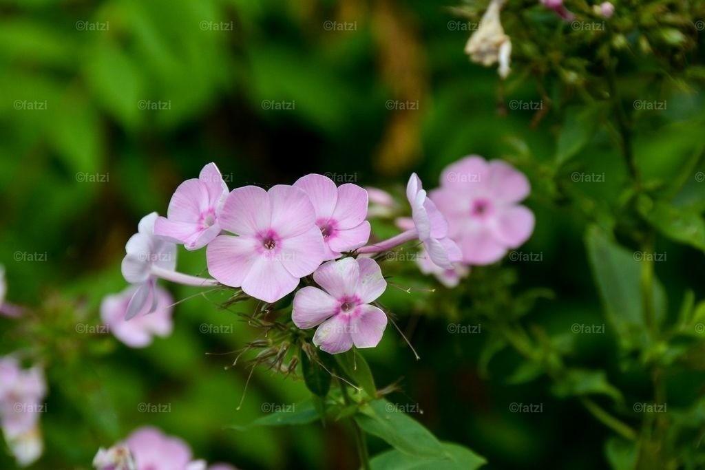 Blumen-Aug15_026_CR