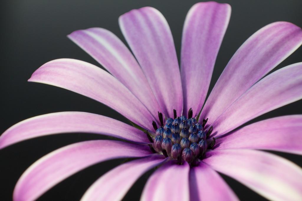 Kapkörbchen   Blumenmotiv