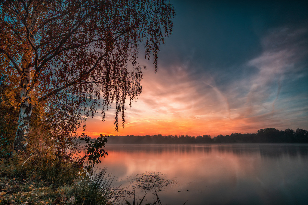 der alte Baum am See