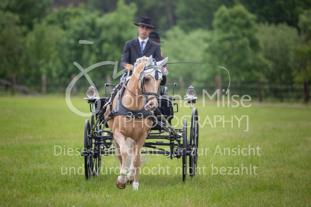 190525_Fahren-007   Pferdesporttage Herford 2019 Fahren