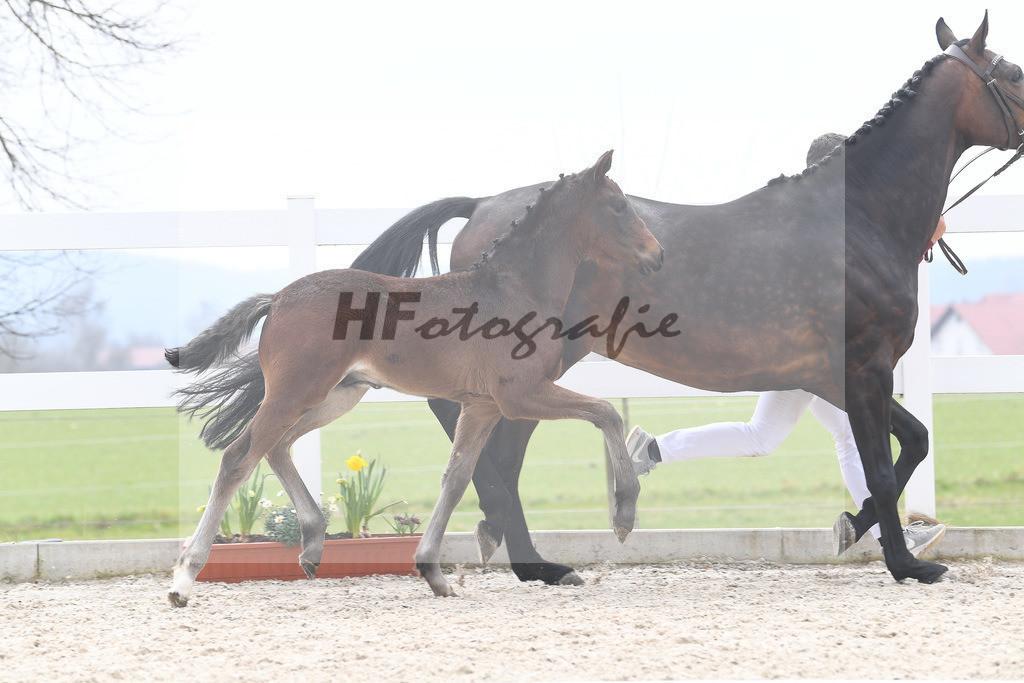 Kat-Nr. 13 HF Von Und Zu 6210416