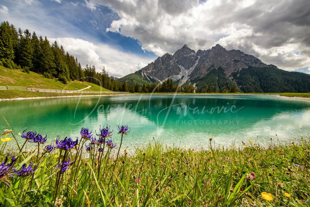 Serles | Blick auf die Serles - im Vordergrund eine geschütze Bergflockenblume
