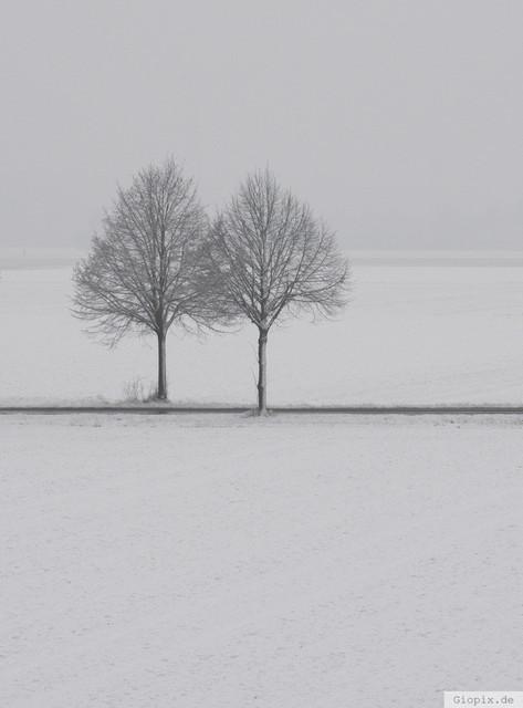 Zwei Bäume und Schnee | Zwei Bäume in einer weissen Winterlandschaft bei Raderbroich
