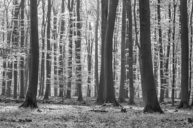 Wald im Sommer - Ruhe und Erholung - Schwarzweiß | Wald im Sommer am frühen Morgen. Die Einsamkeit bei Ruhe und Frieden und frischer Luft genießen.