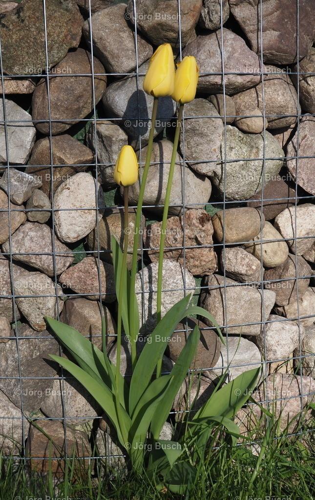 Blume am Brunnen_2
