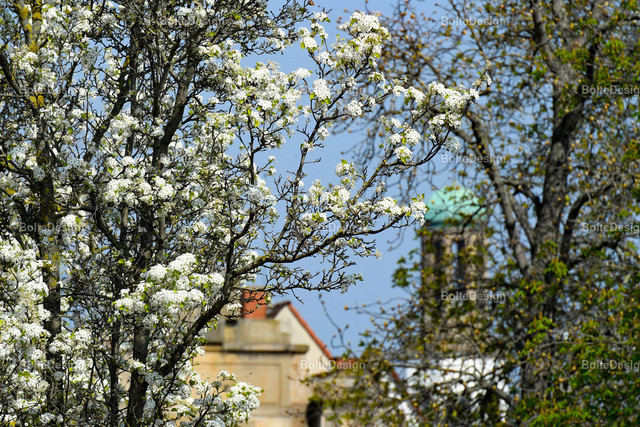 20190401_0355_BLUMEN | FT, Mahlastraße, Speyerer Tor, Zwölf-Apostel-Kirche, Blumen