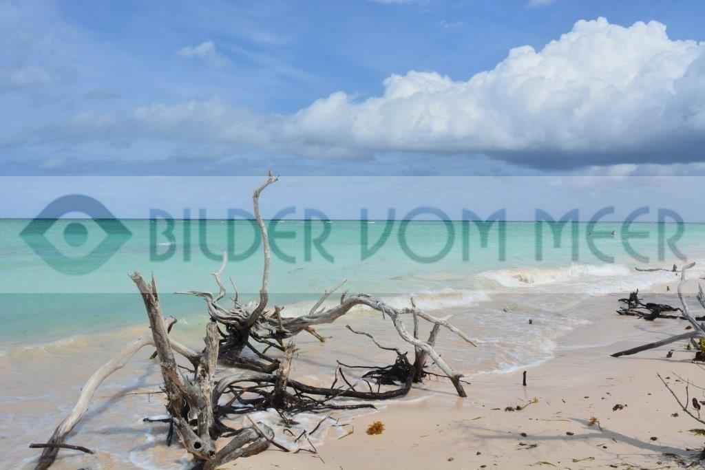 Bilder vom Meer Karibik | Holz und Wolkentürmeam kubanischen Strand