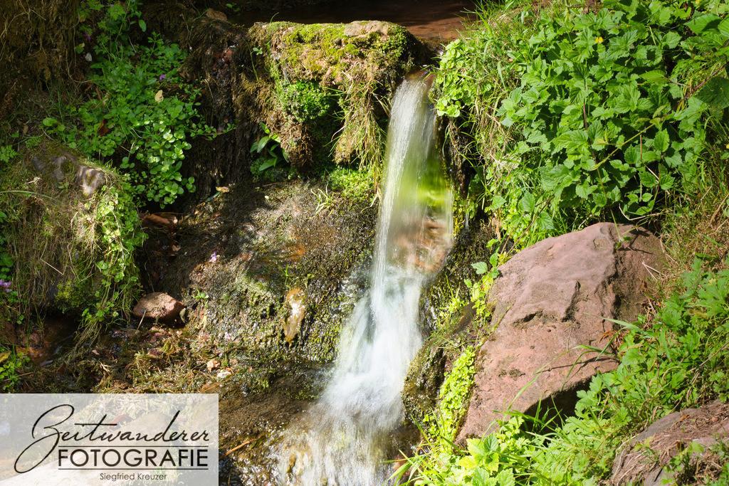 Zittenfelder Quelle    Die Zittenfelder Quelle, eine der Siegfriedsquellen, aus der ein Miniaturwasserfall entspringt. Die Quelle befindet sich zwischen Schneeberg und Zittenfelden, nicht weit von Miltenberg entfernt.