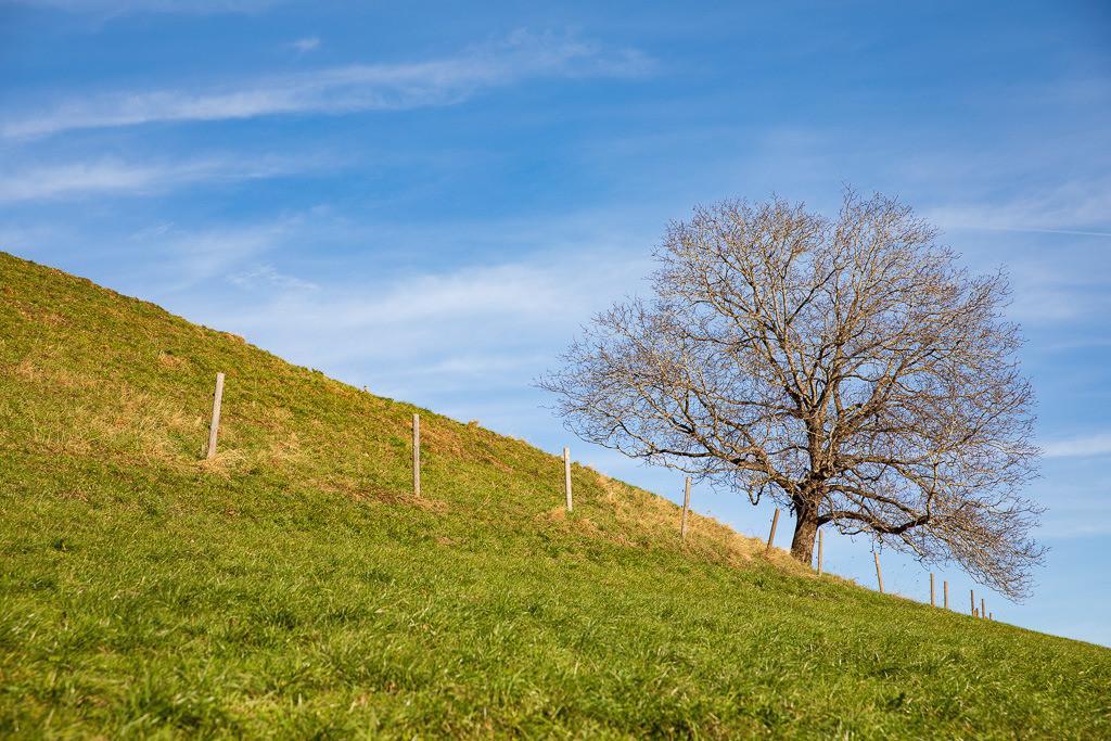Im Himmeblau steht der Baum   Baum im Frühwinter auf der Wiese am Samerberg.