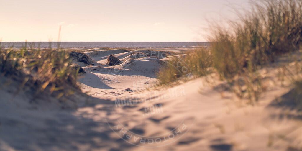_MGA2690 | Düne am Meer