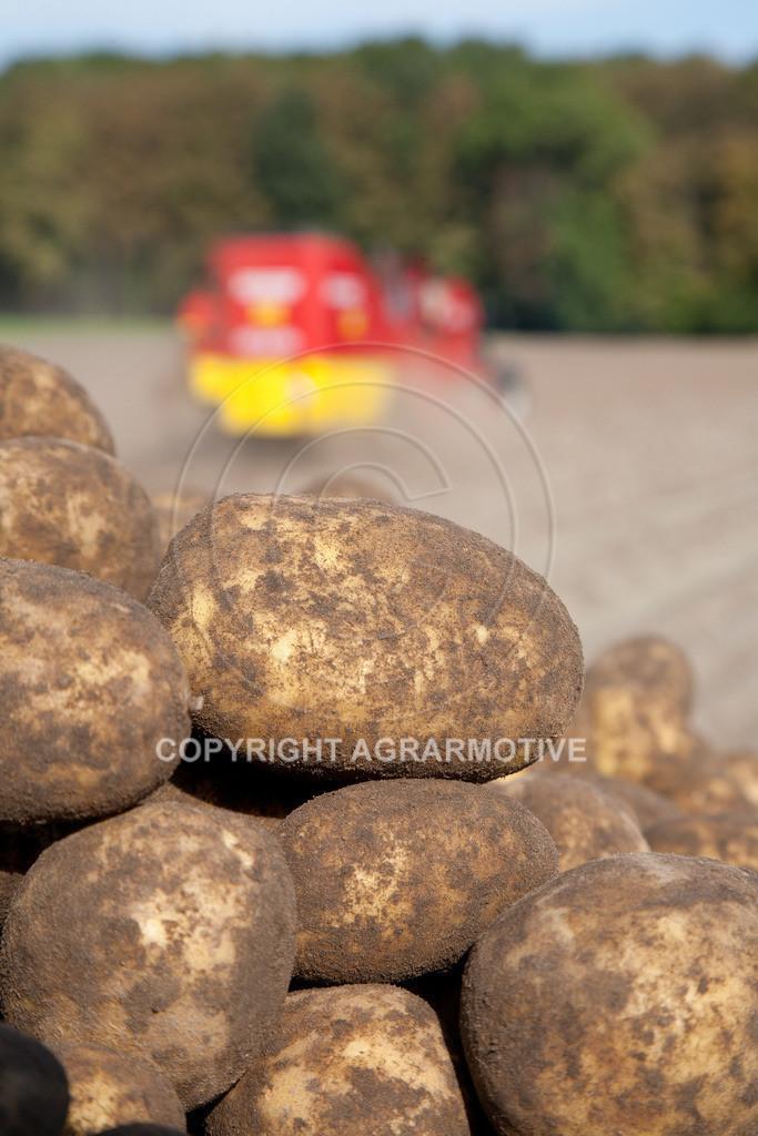 20110929-IMG_6008 | Ernte auf einem Kartoffelfeld - AGRARBILDER