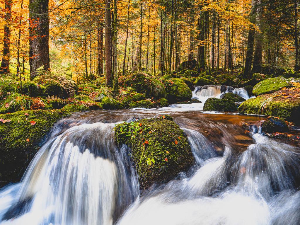 Herbstliche Elzfälle | An den Elzfällen im Prechtal im Schwarzwald