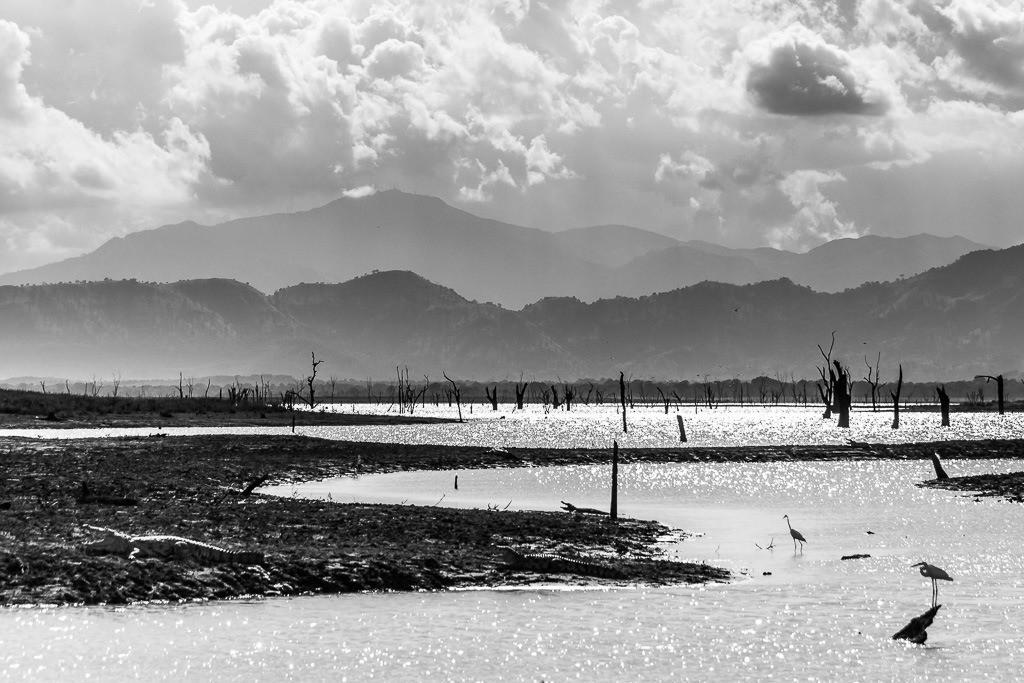 Landschaft in Sri Lanka mit Krokodilen