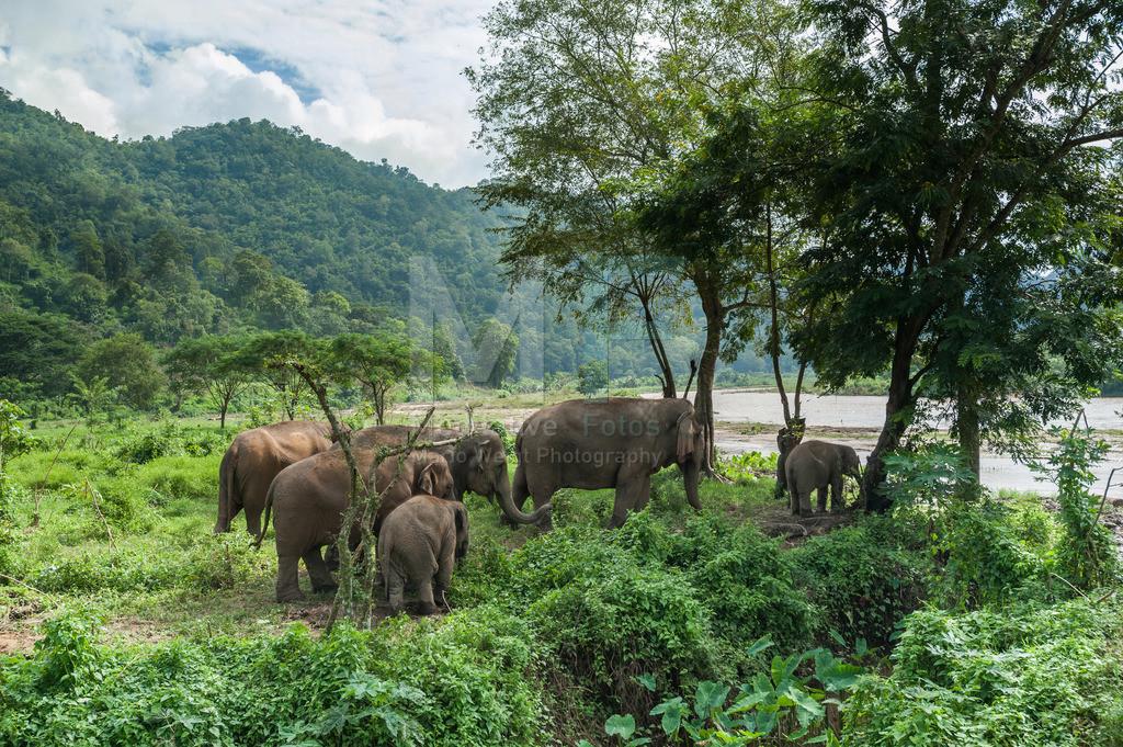 Elefanten am Fluss | Elefanten im Mae Taeng Valley