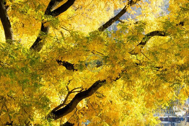 Stuttgart Heslach Karlshöhe Stadtpark im Herbst | DEU/Deutschland, Baden-Württemberg, Stuttgart, 12.11.2018, Stuttgart Heslach Karlshöhe Stadtpark im Herbst © 2018 Christoph Hermann Bild-Kunst Urheber 707707