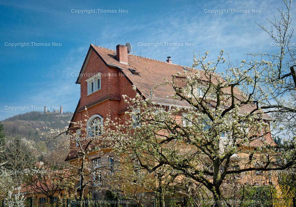 Auerbacher_Fruehlingsfrische   Bensheim,Auerbach,Blick von der Ernst-Ludwig-Promeande zum Auerbacher Schloss,,;BIld: Thomas Neu
