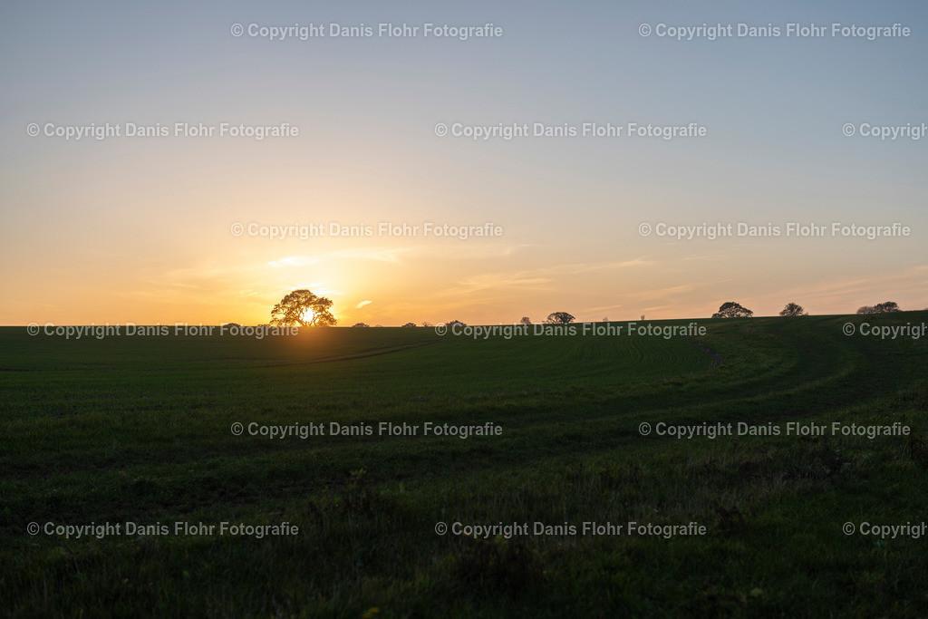 Holsteiner Eiche im Sonneuntergang