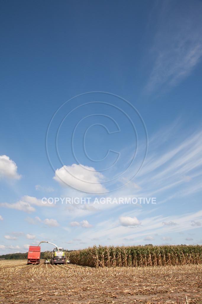 20080914-IMG_8992 | Silomais wird gehäckselt - AGRARFOTO Bilder aus der Landwirtschaft