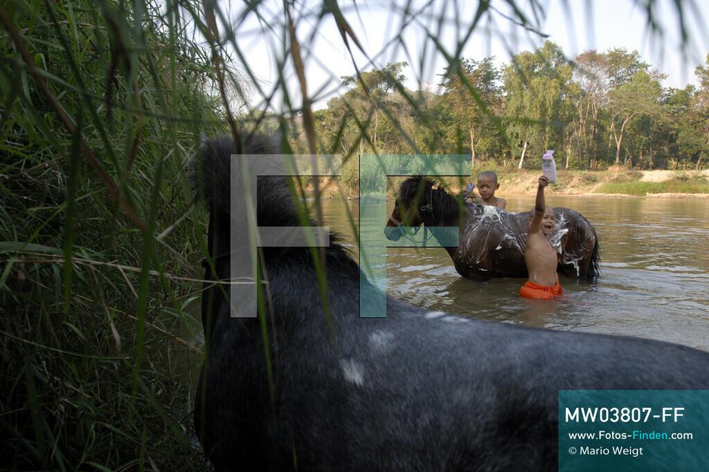 MW03807-FF | Thailand | Goldenes Dreieck | Reportage: Buddhas Ranch im Dschungel | Junge Mönche waschen ihre Pferde im Fluss.  ** Feindaten bitte anfragen bei Mario Weigt Photography, info@asia-stories.com **
