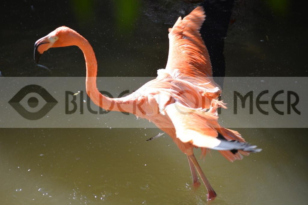 Flamingo Art Bilder   Rotger Flamingo Art Bilder