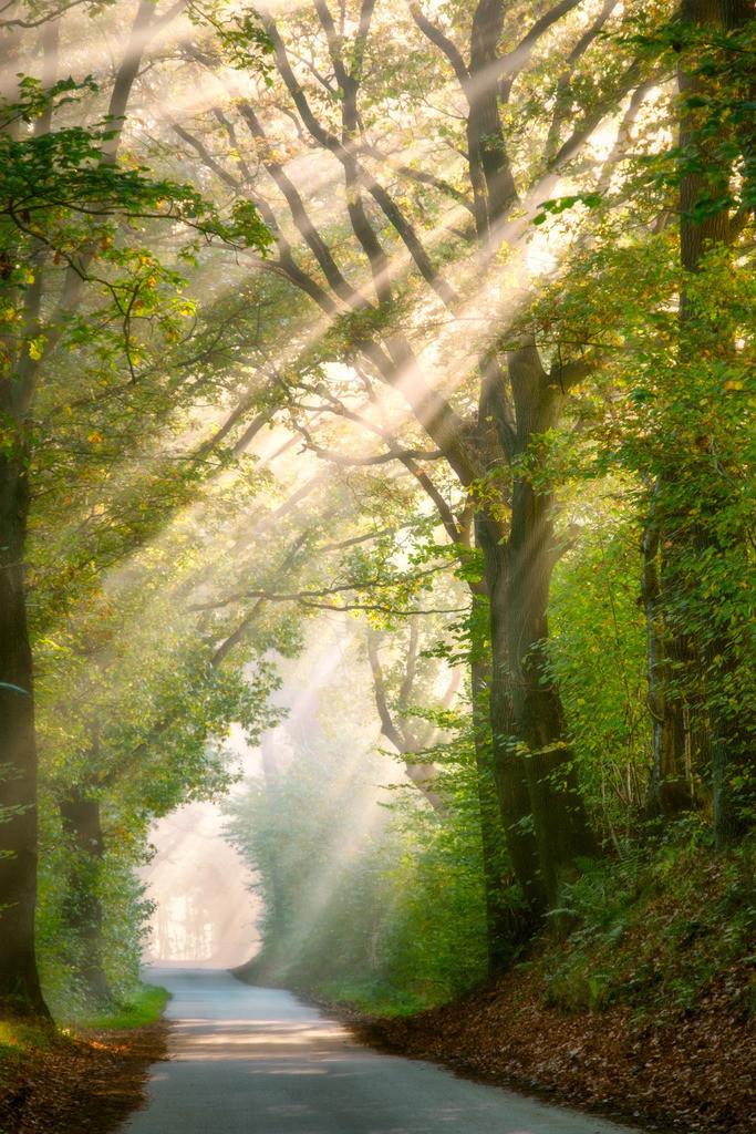 The Beam | Sonnenstrahlen zwischen Bäumen an einem nebligen Herbstmorgen.