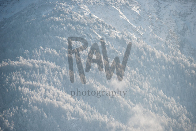 Wald unterhalb Folluhorn | ich mag das flache Licht zum Jahresende