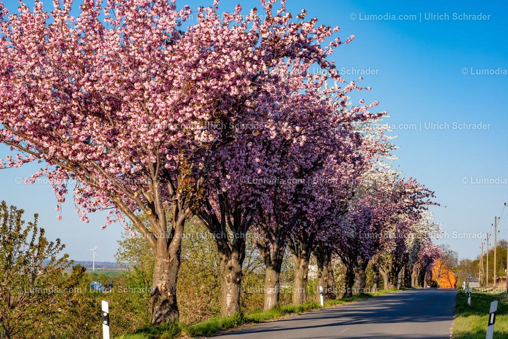 10049-10733 - Blütenpracht bei Dingelstedt | max. Auflösung 8256 x 5504