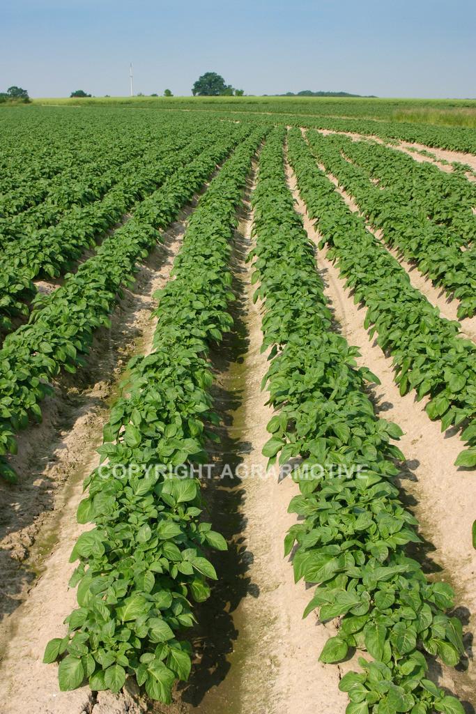 142_4297 | Kartoffelacker - AGRARBILDER
