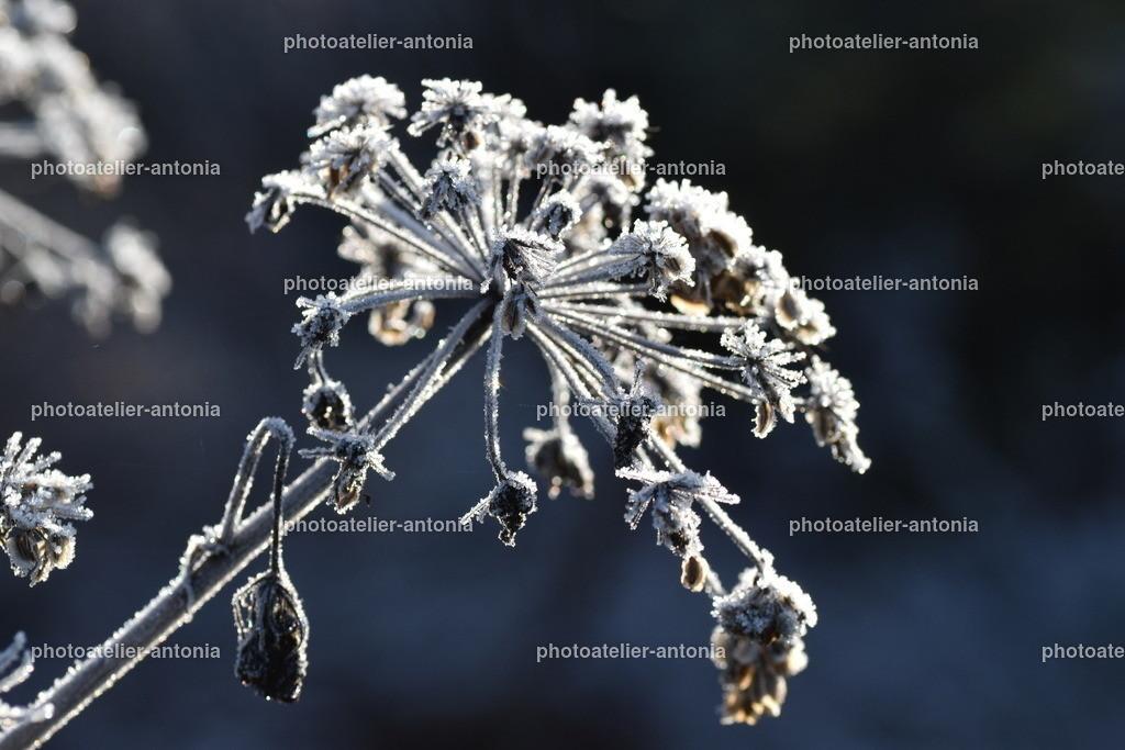 Frost III