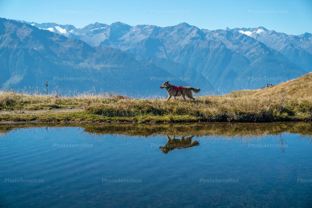 Juma spiegelt sich im Alpsee | Spiegelung im Alpsee