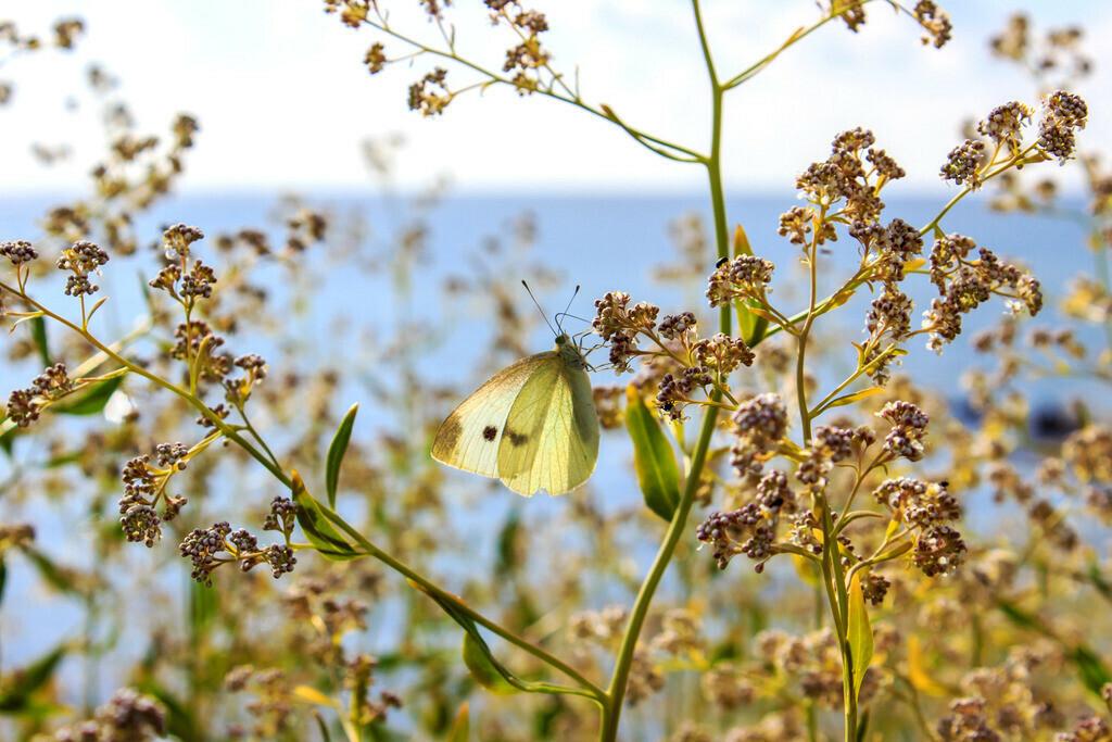 Frühling an der Ostsee | Schmetterling am Wegesrand zwischen Damp und Booknis