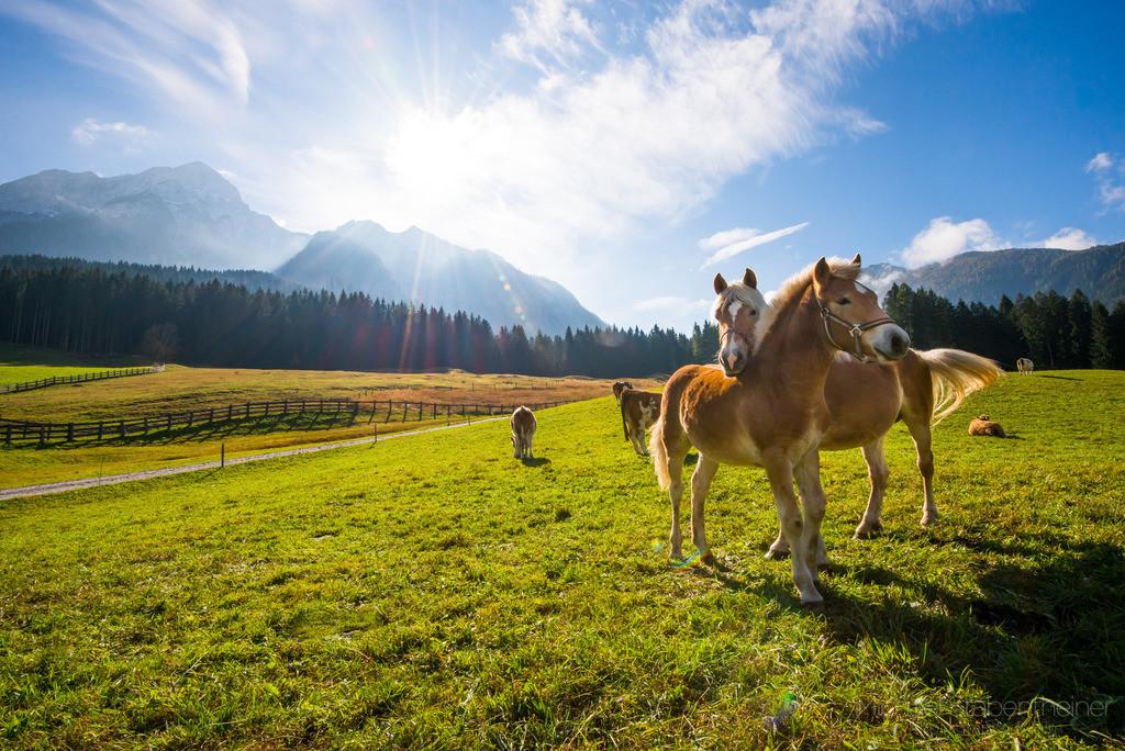 Pferde auf der Wiese | Pferde auf einer Wiese im Lesachtal