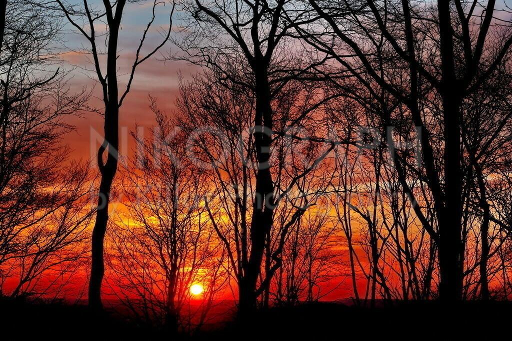 Sonnenuntergang | Die Silhouette der Bäume zeichnet sich im Abendrot ab. Die Sonnenuntergänge im Stadtwald Iserlohns sind schon was besonderes.
