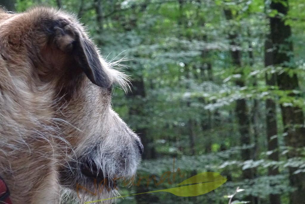 Fellfreundin | Glück ist, wenn Du mit Deinem Hund gemeinsam in eine Richtung blickst. Seite an Seite.