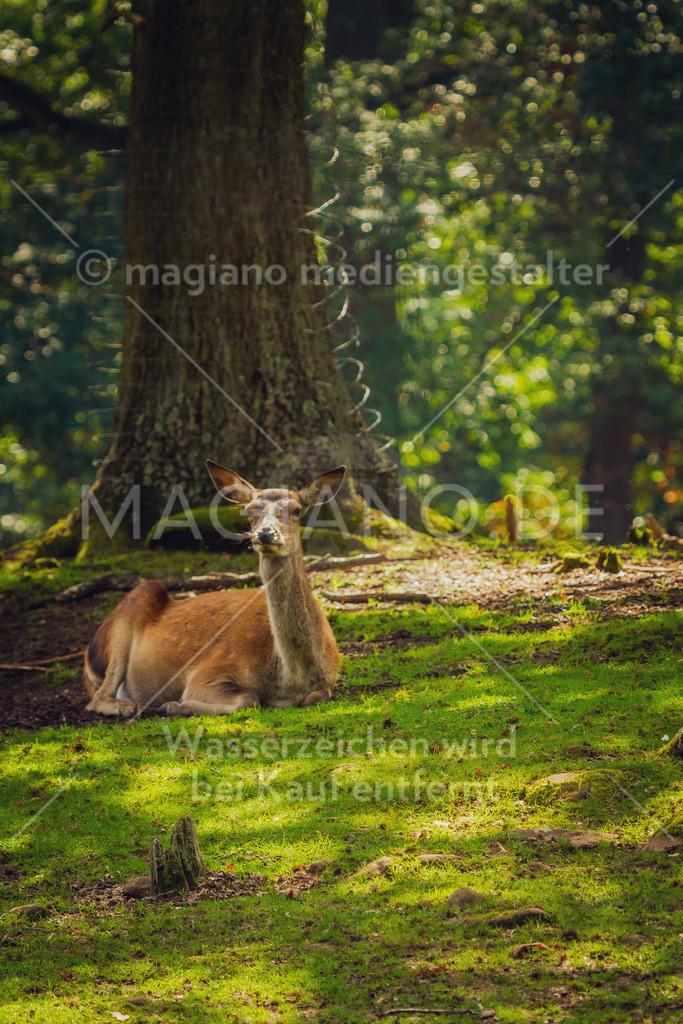 Wildpark-Kaiserslautern_20210918_0964