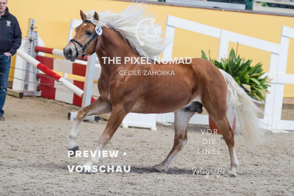 170204-37-Novato050 | Novato von Niro x Wildprinz // Siegerhengst