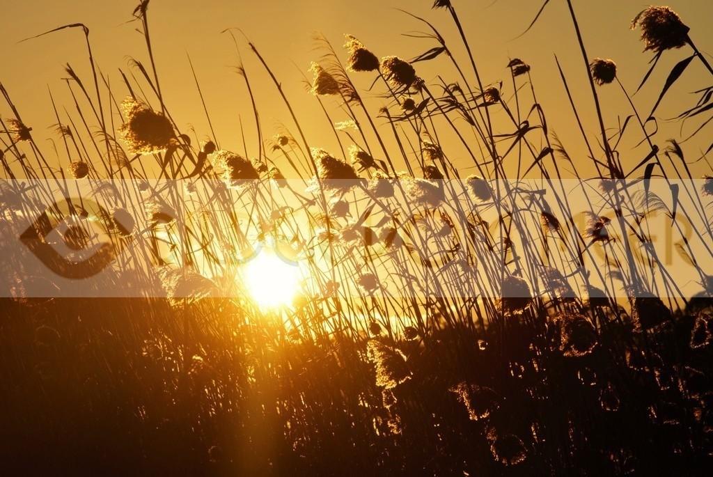 Bilder vom Meer | Sonnenuntergang am Ufer