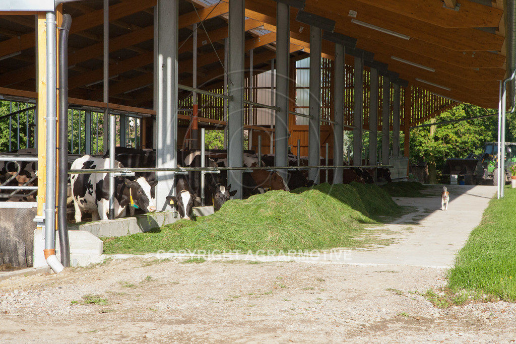 20110627-IMG_3188 | Milchkühe im Boxenlaufstall